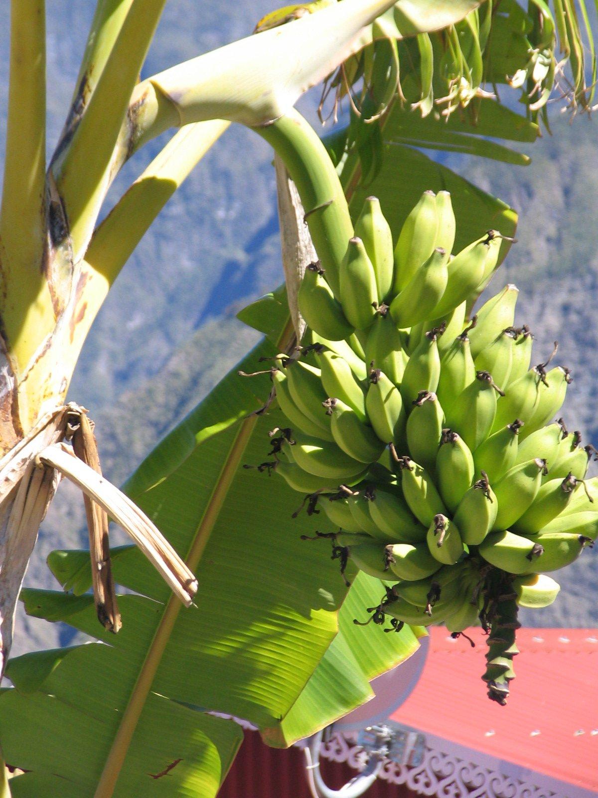 Image gallery le bananier - La maison du bananier ...